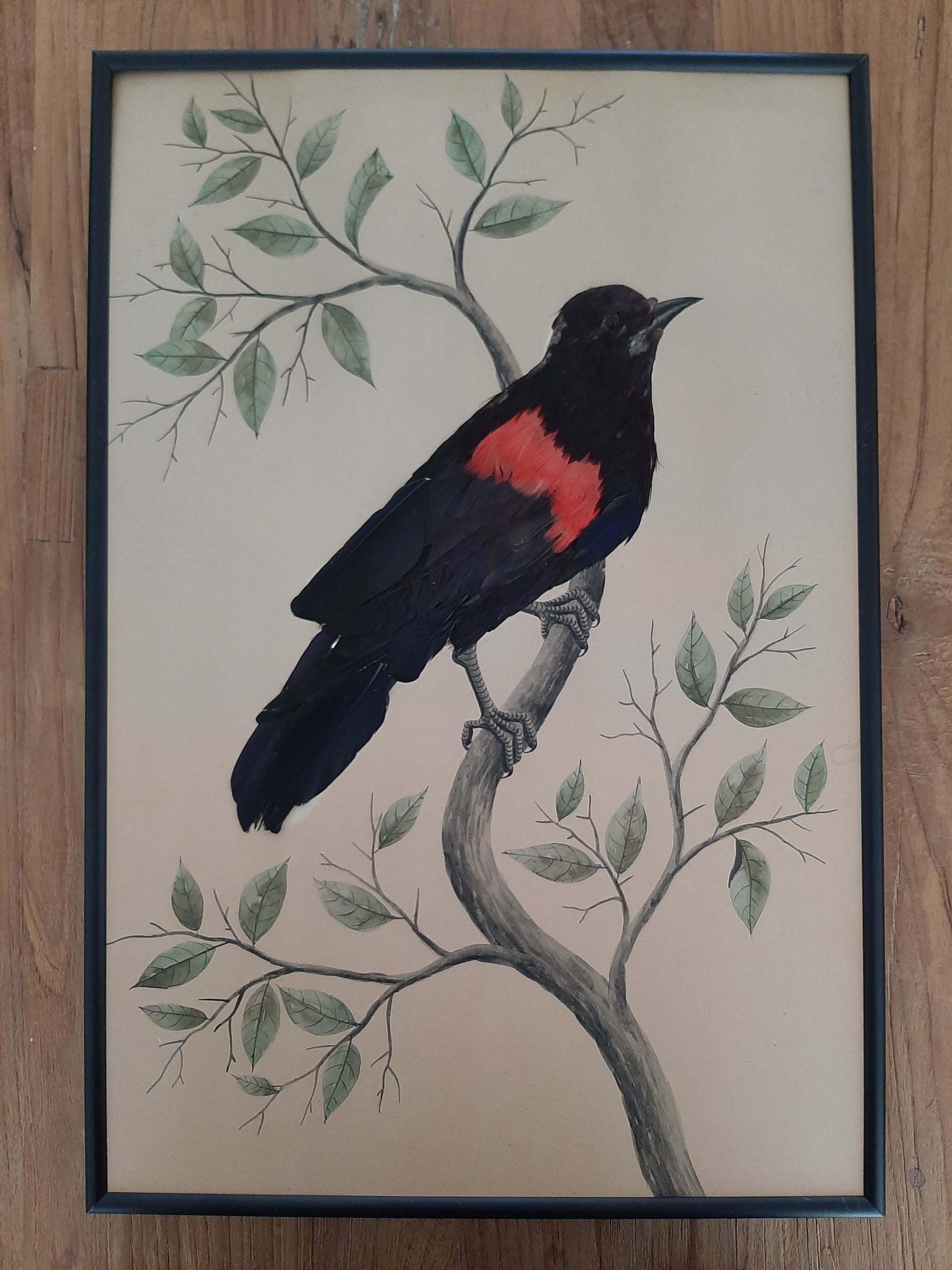 productfoto zwarte vogel 1