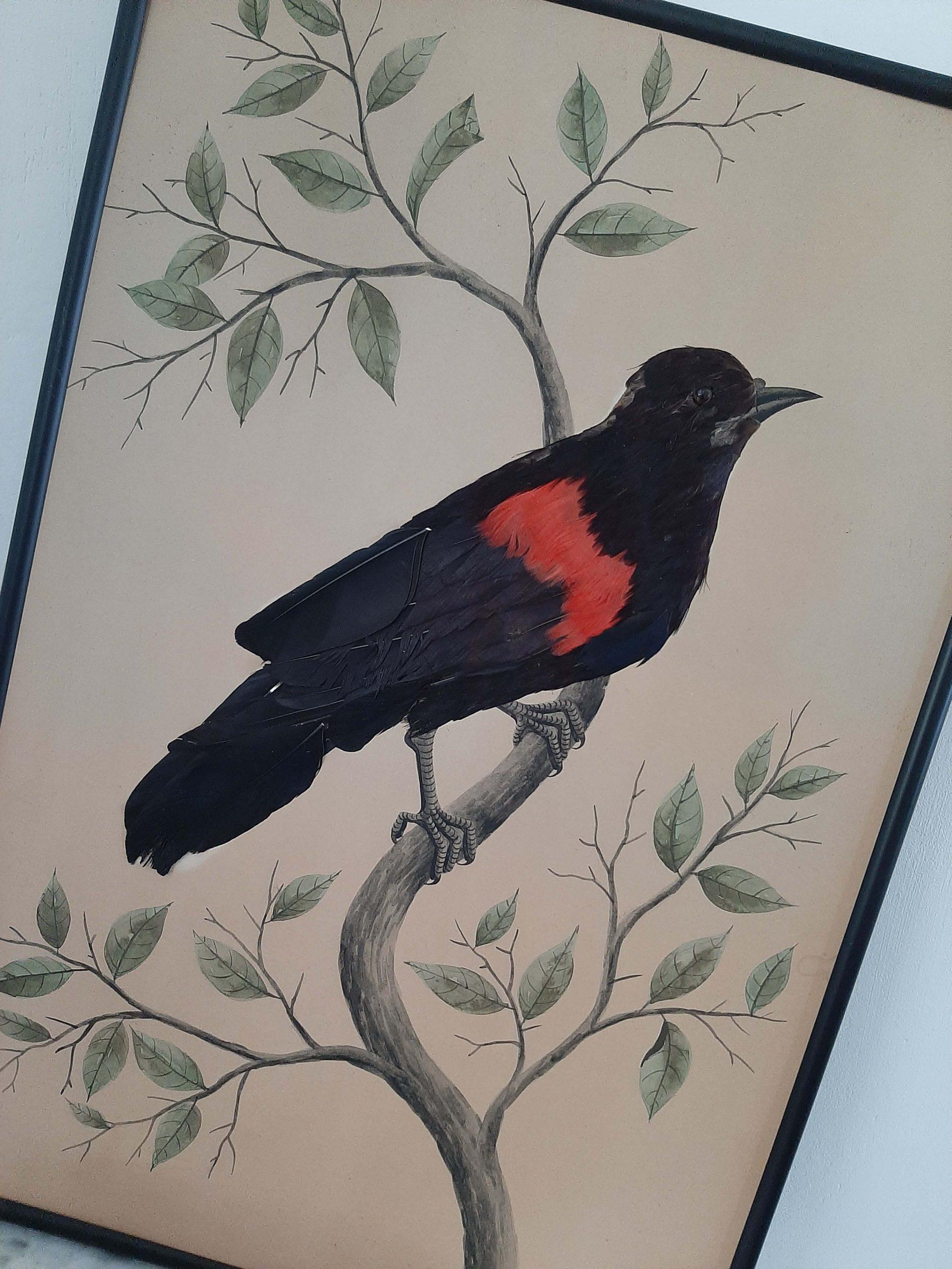 productfoto zwarte vogel 2